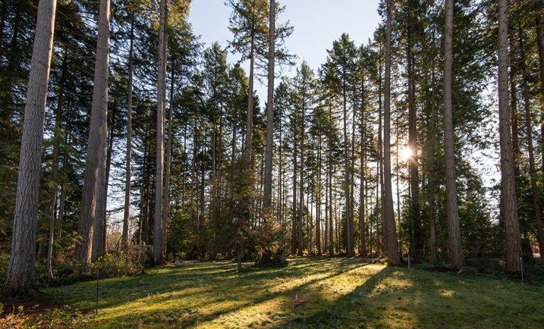 Cedar Walk by Polygon UBC Condos